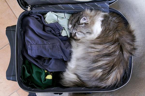 长途旅行,如何处置家中的猫狗?如果不能一同出发那就寄养吧!记得要签寄养合同哦!
