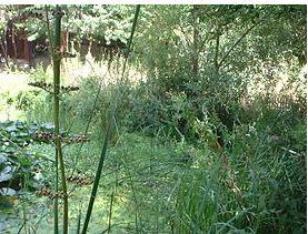 巴黎20区自然园林1