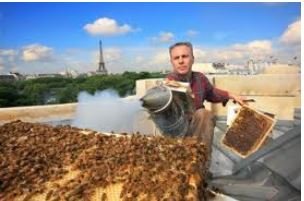 Rucher du Jardin du Luxembourg蜂蜜