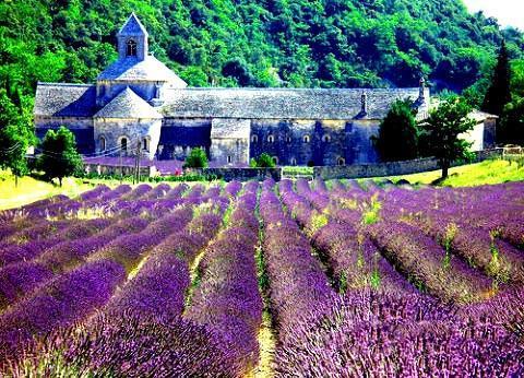 普罗旺斯薰衣草之旅