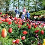库肯霍夫 世界上最美丽的春季花园
